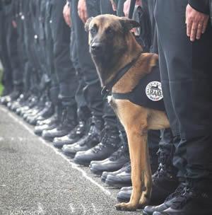 フランス警察犬 ディーゼル