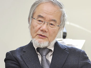 大隅良典 ノーベル賞受賞 オートファジー
